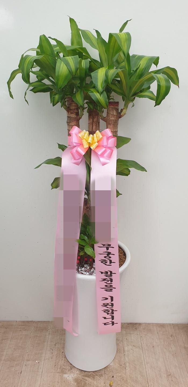 주문자 김00 인천 남동구 배송된 상품 사진입니다