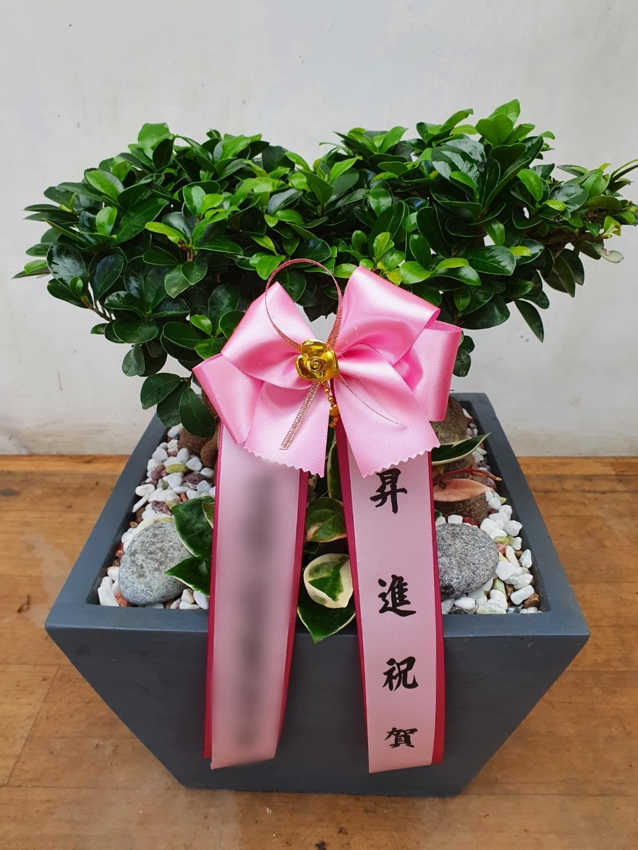 주문자 이ㅇㅇ 경기 성남으로 배송된 상품사진입니다